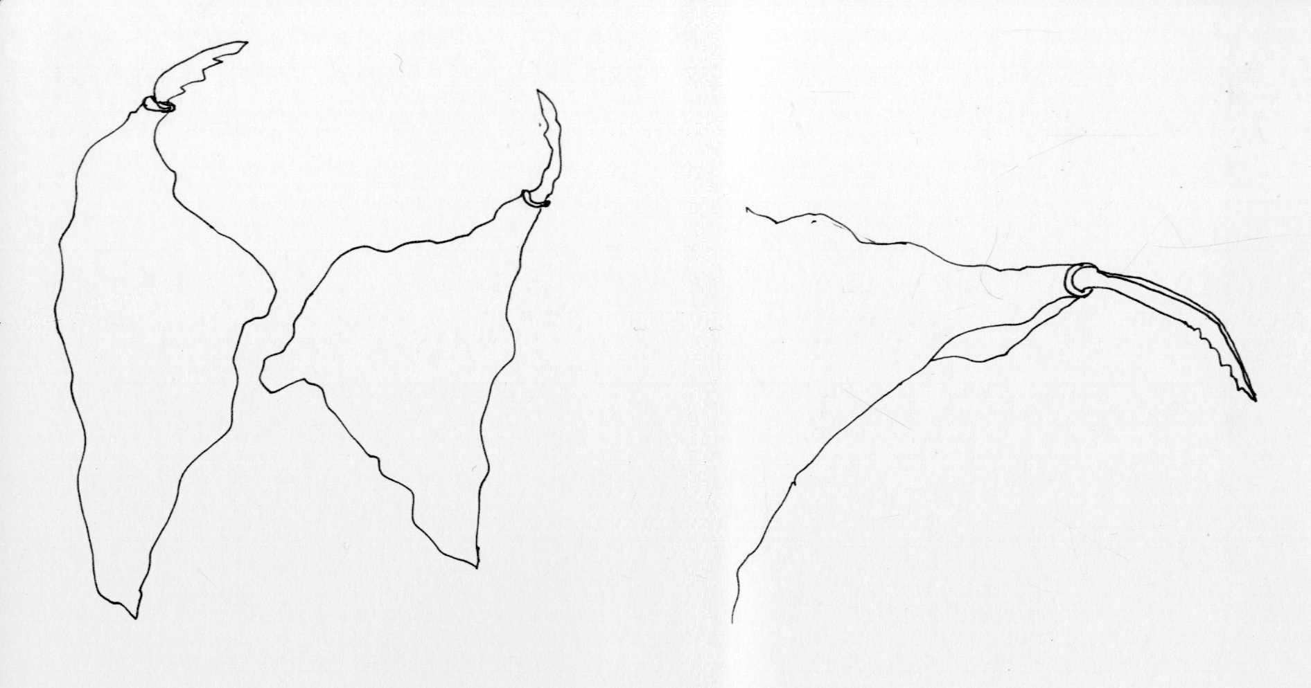 Gray Elegy Bird Concept Sketch
